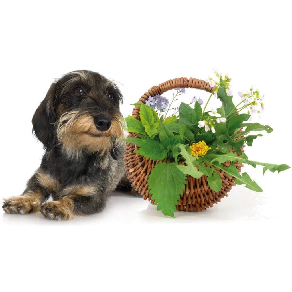 Phytotherapie für Tiere
