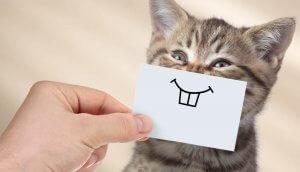 Tierheilpraktiker für medizinisch Vorgebildete