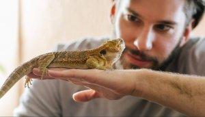 Reptilien in der Tierheilpraxis