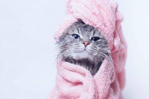 Tierheilpraktiker-Aufbaustudium Praxiskomeptenz