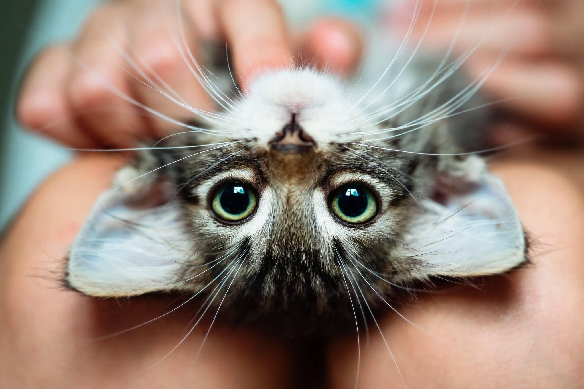 Tierheilpraktiker Ernährungsberatung Katzen