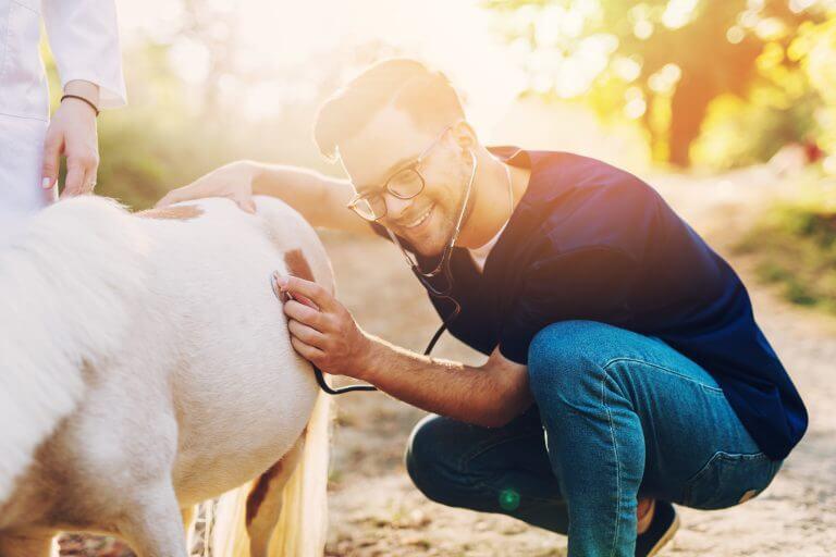 Tierheilpraktiker mit Praxiskomeptenz Aufbaustudium