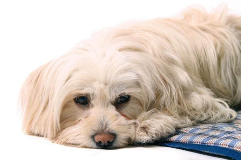Webinare Kräuter- und Vitalpilze für Tiere