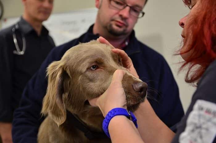 Tierheilpraktiker-Ausbildung Untersuchung Hund
