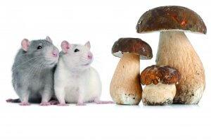 Kräuter und Vitalpilze für Tiere