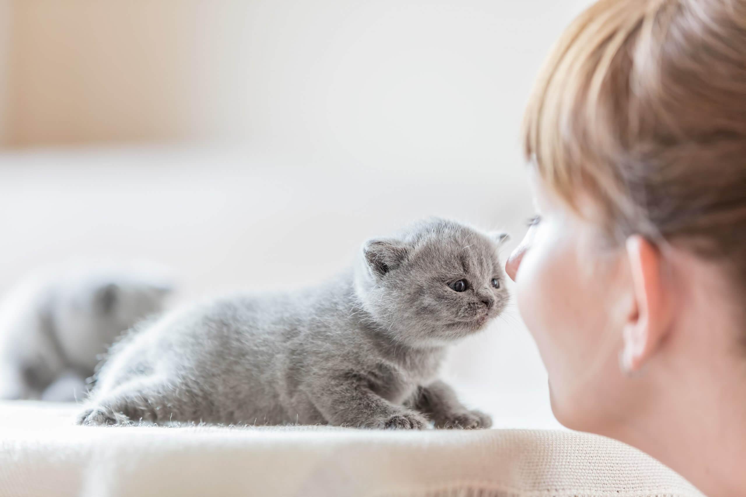 Tierheilpraktiker Aufbaukurs