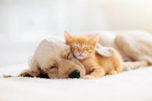 Gesundheitsberater für Hunde und Katzen