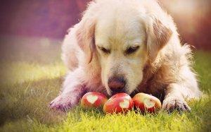 Ernährungsberater für Hunde