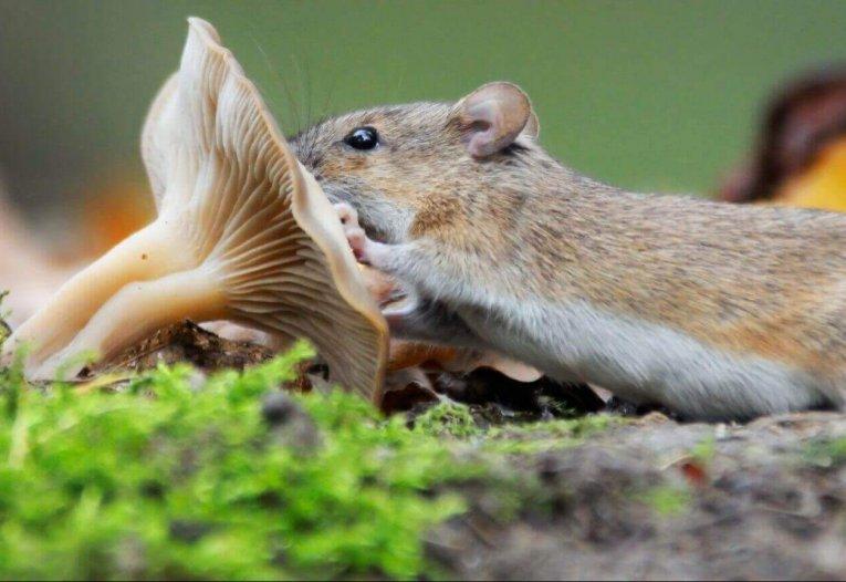 Kräuter- und Vitalpilztherapie für Tiere