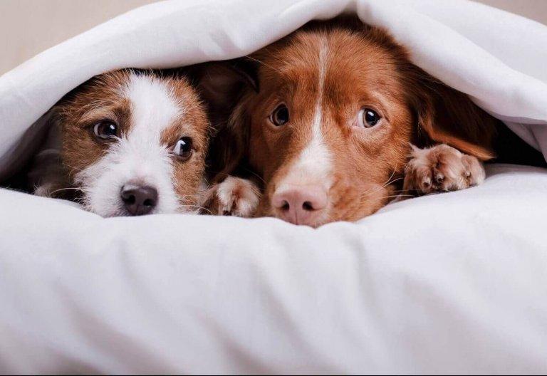 Homöopathie für Tiere