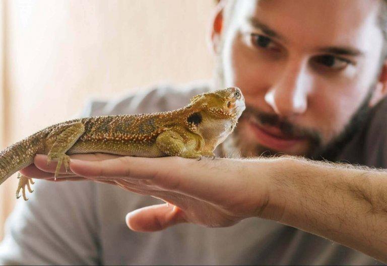 Haltung und Behandlung von Reptilien