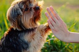 Differentialdiagnostik in der Tierheilpraxis, Teil 2