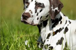 Kleine Kräuterkunde für Hundehalter