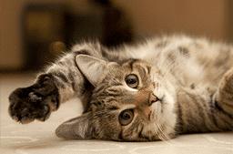 Katzenspezial: Nierenerkrankungen und Nierendiät bei Katzen