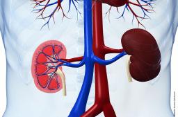 Differentialdiagnose: Erkrankungen von Niere und Harnwegen