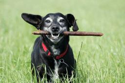 Natürlich fit im Alter! Naturheilkundliche Unterstützung von Hunde- und Katzensenioren, Teil 1