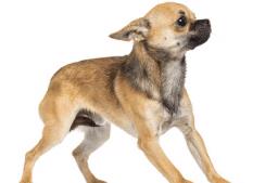 Angst und Stress beim Hund, Teil 1