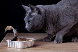 Qualitätscheck Katzenfutter