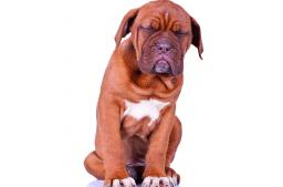 Darmsanierung beim Hund
