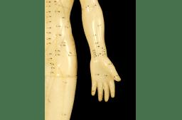 Organ- und Meridiansysteme aus Sicht der TCM: Lunge und Dickdarm