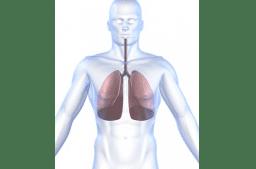 Anatomie der Lunge und Atmungsorgane