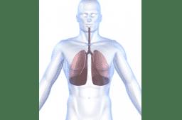 Pathologie der Lunge und Atmungsorgane