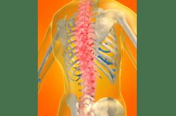 Neurologie - willkürliches und autonomes Nervensystem, Reflexe, Differentialdiagnose