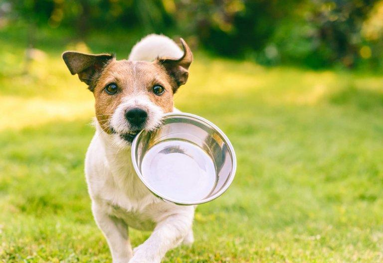 Ernährungsberatung für Tiere