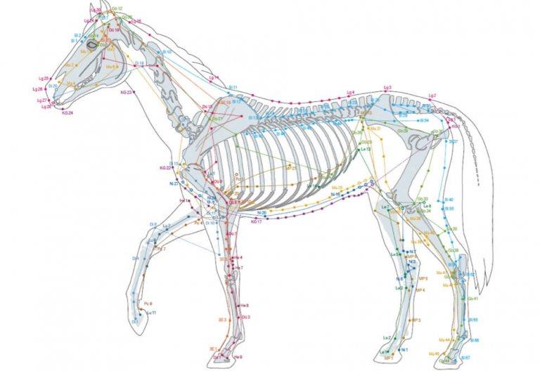 TCVM Pferd