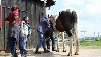 Tierheilpraktiker-Fernstudium Groß- und Kleintiere