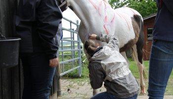 Tierheilpraktiker-Fernstudium Präsenzphase Pferd